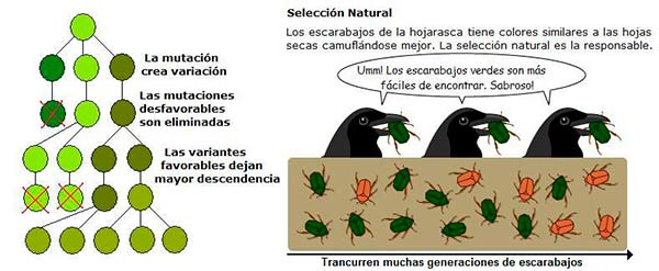 selección natural 2