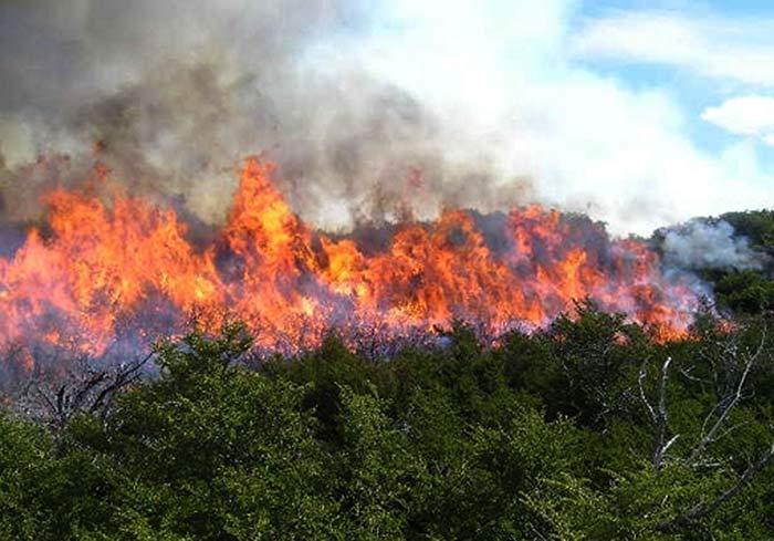 consecuencias de los incendios forestales 1