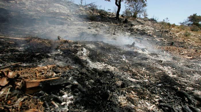 suelo incendios forestales