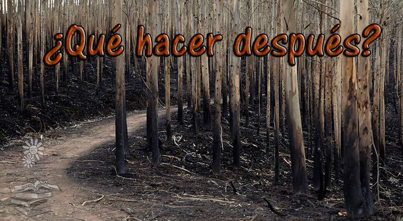 incendios forestales portada