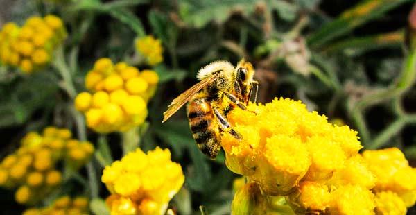salvar las abejas portada