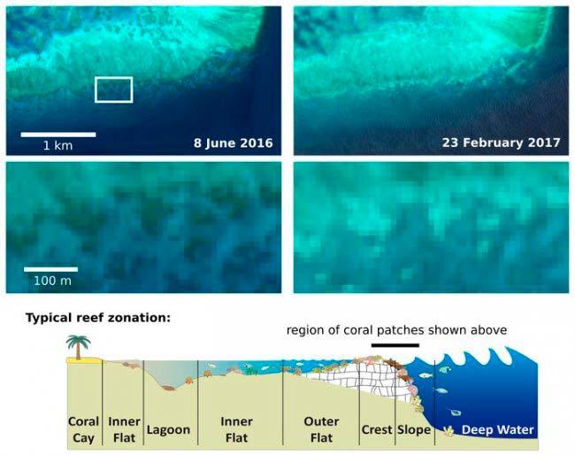 blanqueamiento de coral imágenes satélite