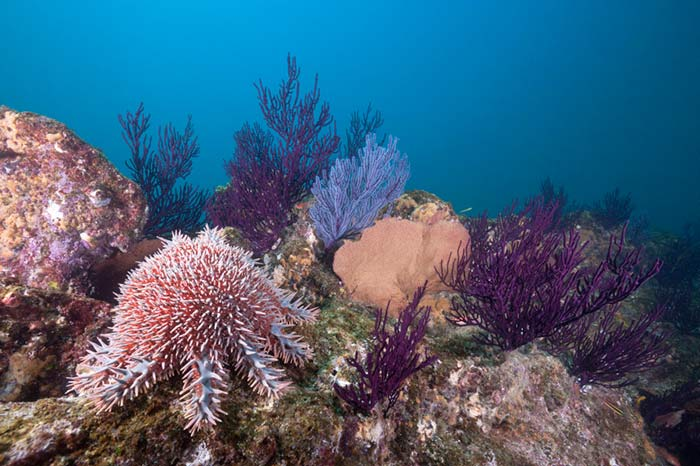 blanqueamiento de coral arrecife