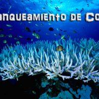 blanqueamiento de coral Portada