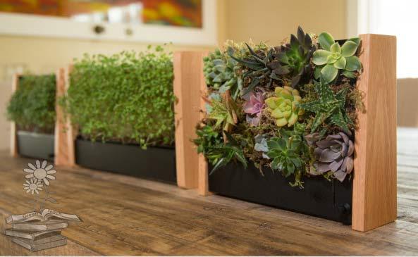 EcoQube con brotes y plantas decorativas