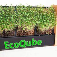 EcoQube Portada