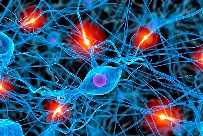 sinapsis neuronas
