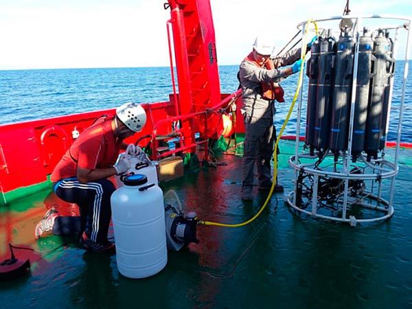 identificacion virus de océanos