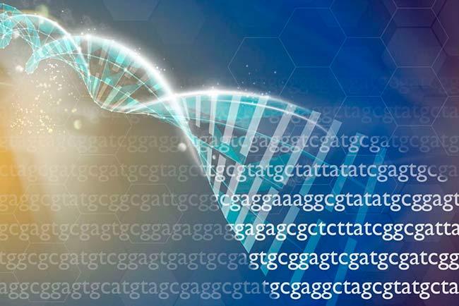 genética ADN, teorias envejecimiento