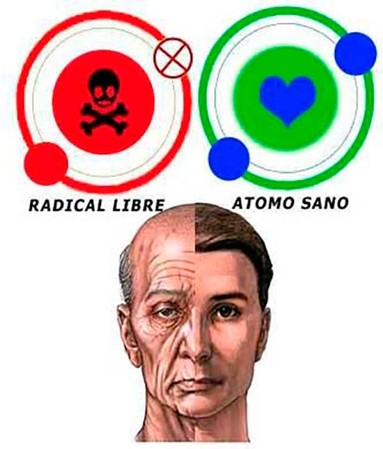 radicales libres y envejecimiennto