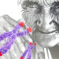 teoría del envejecimiento Portada