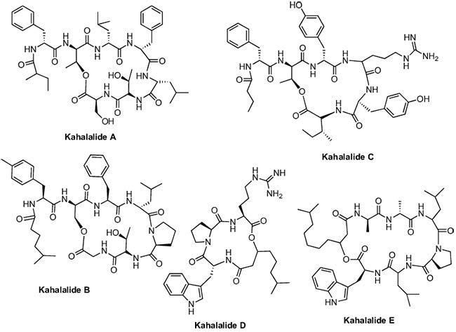 péptidos marinos Figura 12