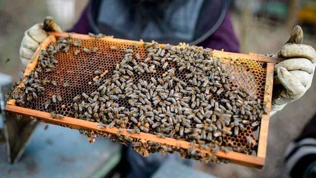 panel abejas muertas