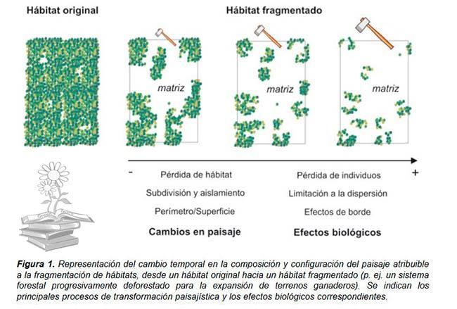 proceso fragmentación de hábitats