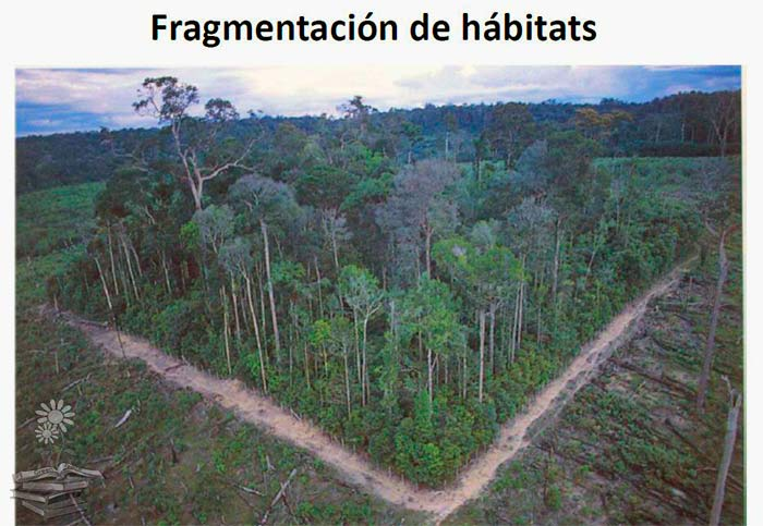 fragmentación de hábitats portada