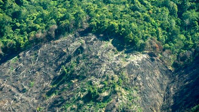 fragmentación del hábitat deforestación