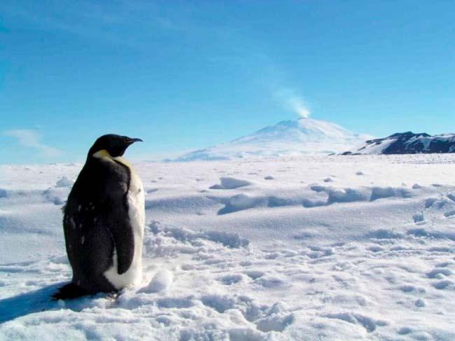 91 nuevos volcanes con pingüino