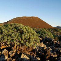 extinciones en masa en Canarias Portada