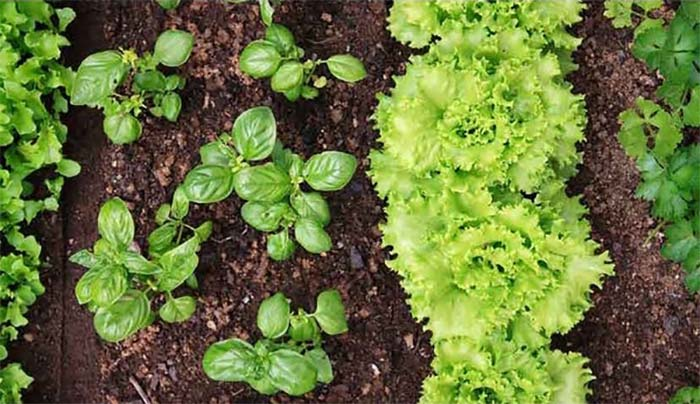 Nutrieno plantas Portada