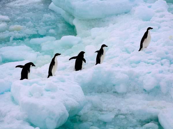 Pingüinos en fila en Antártica