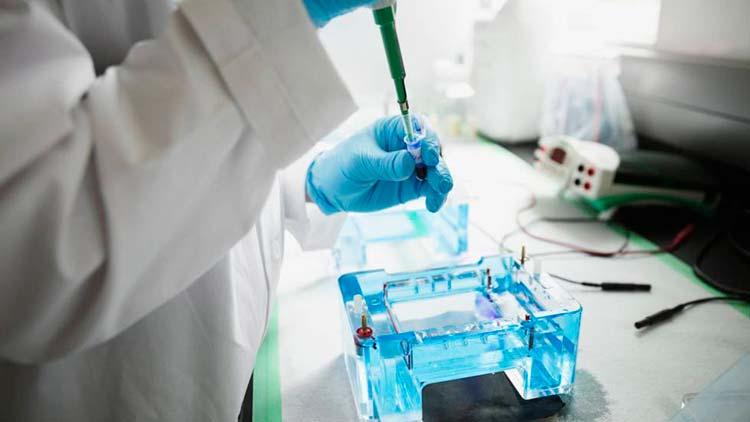 editar el genoma sin tocar los genes Portada