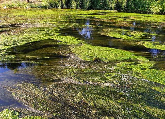 eutrofización aguas