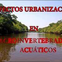 macroinvertebrados acuáticos portada