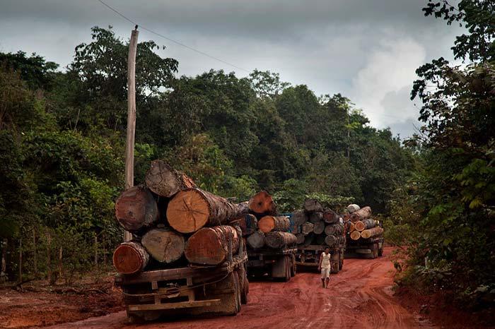 madera ilegal Portada