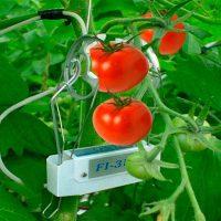 sensores en hojas tomate portada
