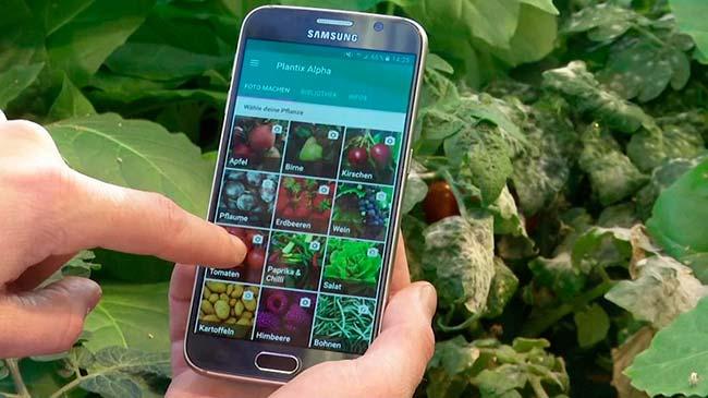 Plantix, app enfermedades plantas