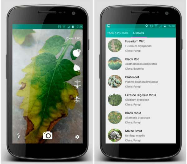 aplicación que detecta enfermedades en plantas