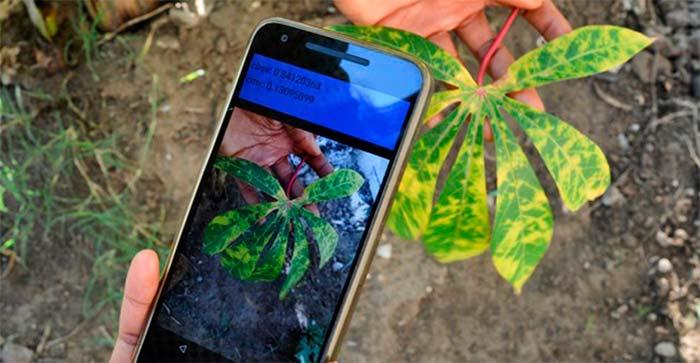 aplicación que detecta enfermedades en plantas Portada