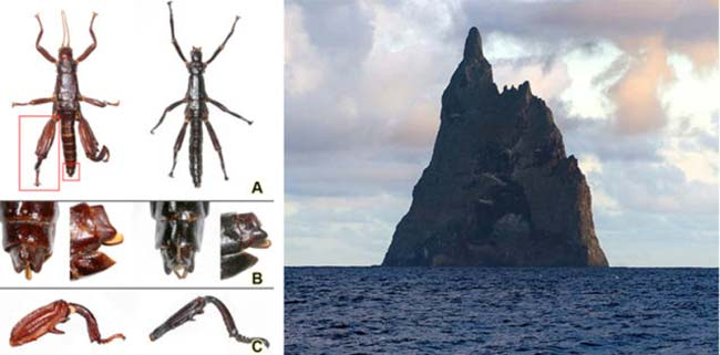 insecto palo gigante isla Lord Howe