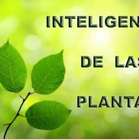 inteligencia de las plantas Portada