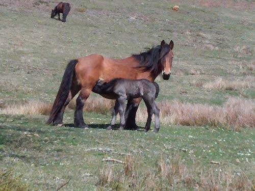 pago en servicios medioambientales, caballos