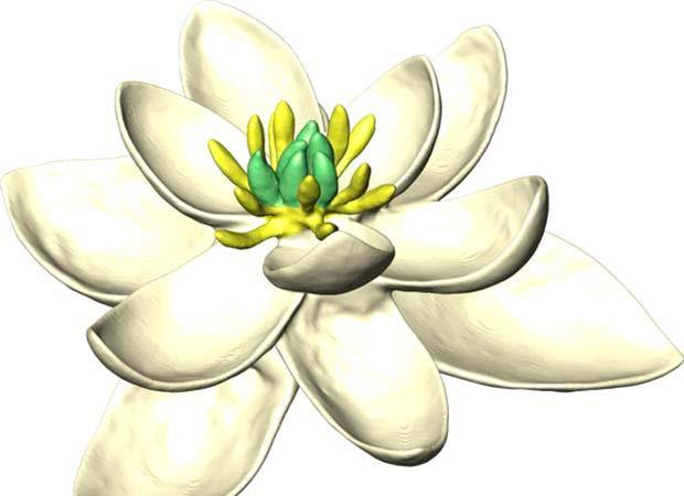 primera flor de la Tierra 1
