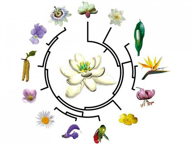 evolución primera flor de la Tierra