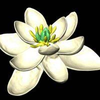 primera flor de la Tierra portada
