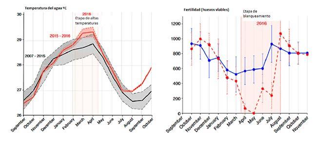 gráficas correlación temperaturas y huevos peces payaso