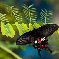 panel solar inspirado en las la alas de la mariposa negra Portada
