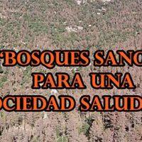 Bosques sanos para una sociedad saludable Portada