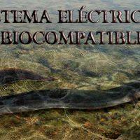 energía de la anguila eléctrica Portada