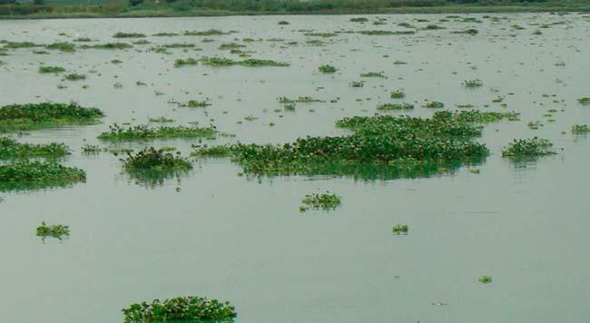 eutrofización en laguna
