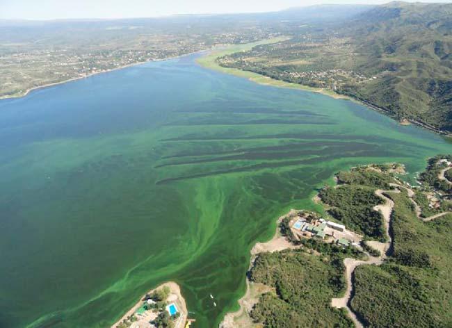 eutrofización de los Grandes Lagos