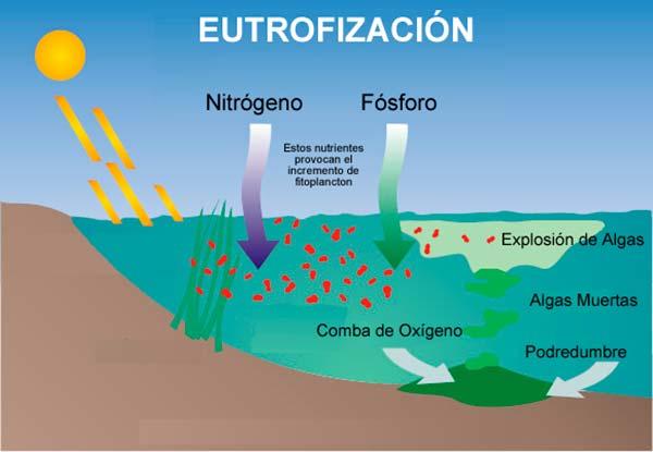 esquema eutrofización