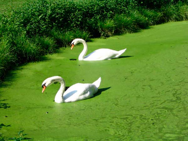 aguas eutrofizadas