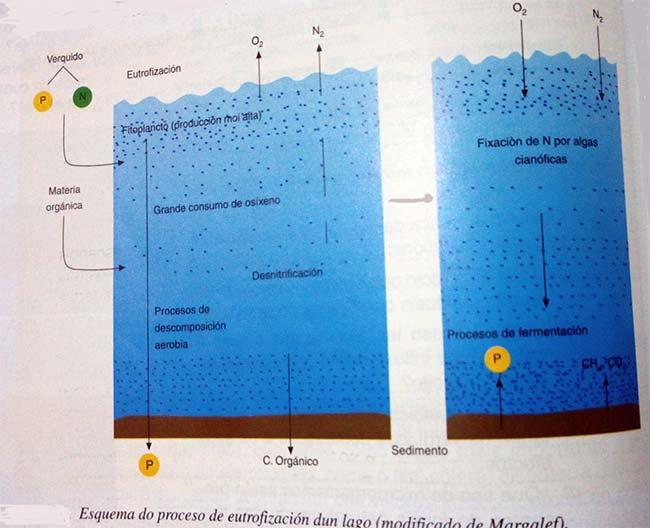 esquema explicativo eutrofización