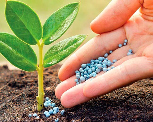 nutrientes eutrofización