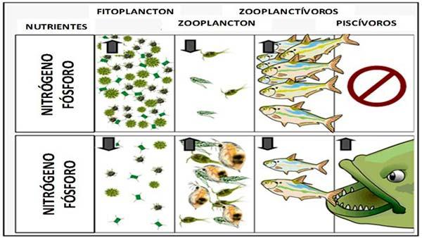 biomanipulación de lagos