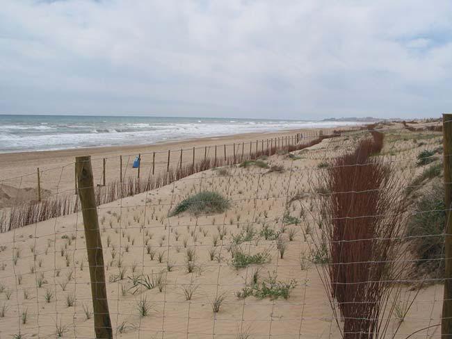 restauración de dunas